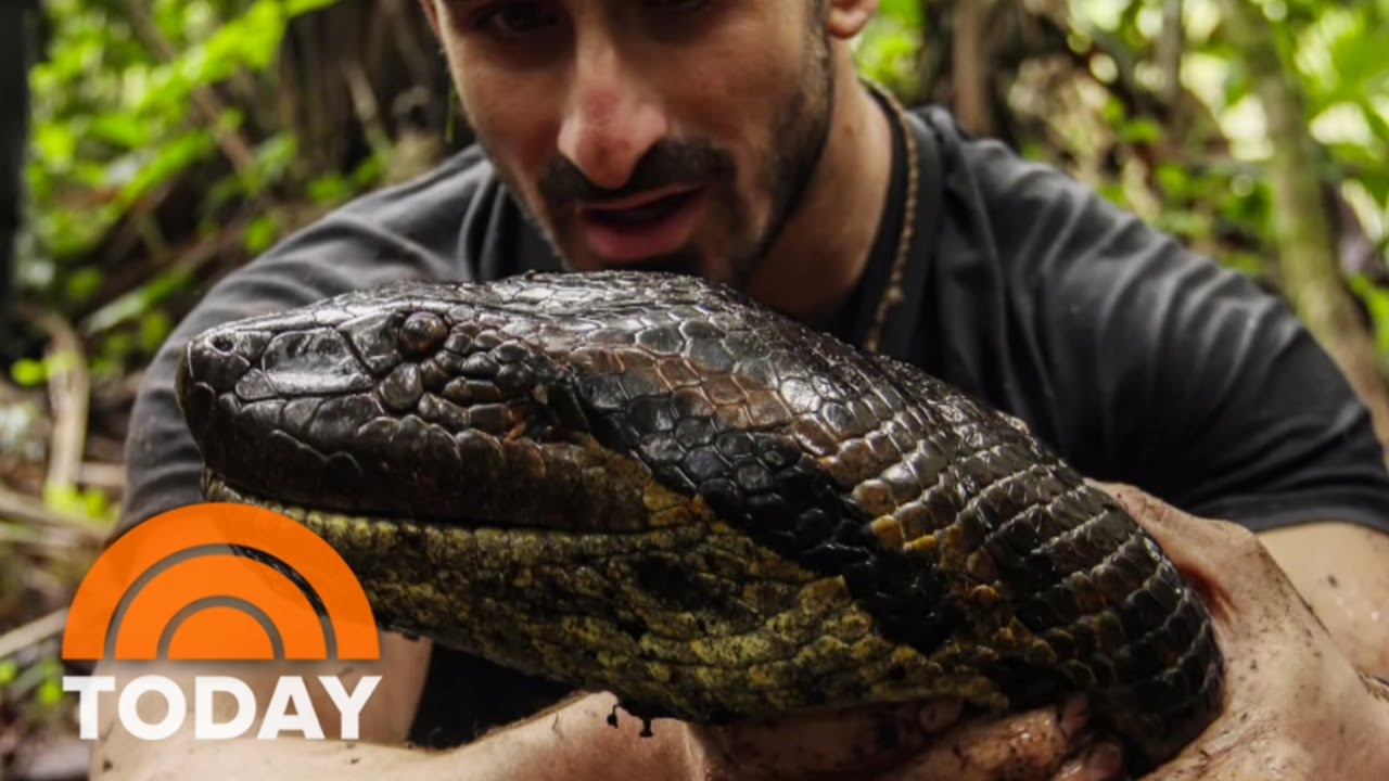 Download Eaten Alive By Anaconda: Why I Did It | TODAY