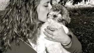 My Dog Rue  - Shihtzu Poodle Baby