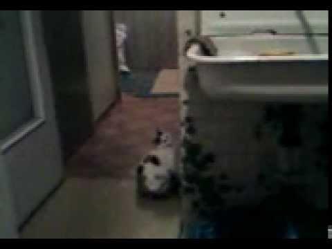 Как кошка делает сальто, на 30-й сек. :)))