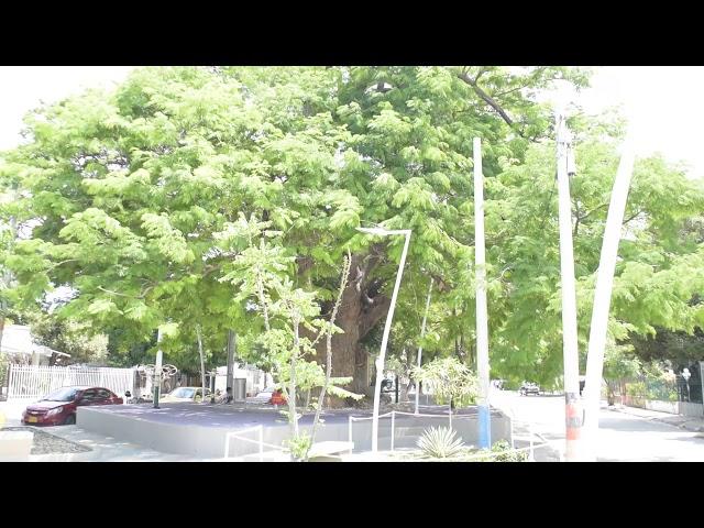 Bonga parque 13 de Junio Santa Marta