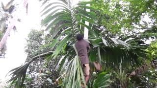 February 2013 Betel Nut Fail,  da guy Hammered Quezon Palawan