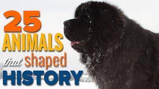 25 Incredible Animals That Shaped Human History