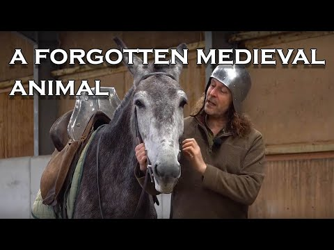 What medieval animal is seldom used today?