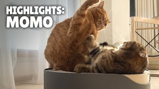 Highlights of MoMo the Cat | Kittisaurus