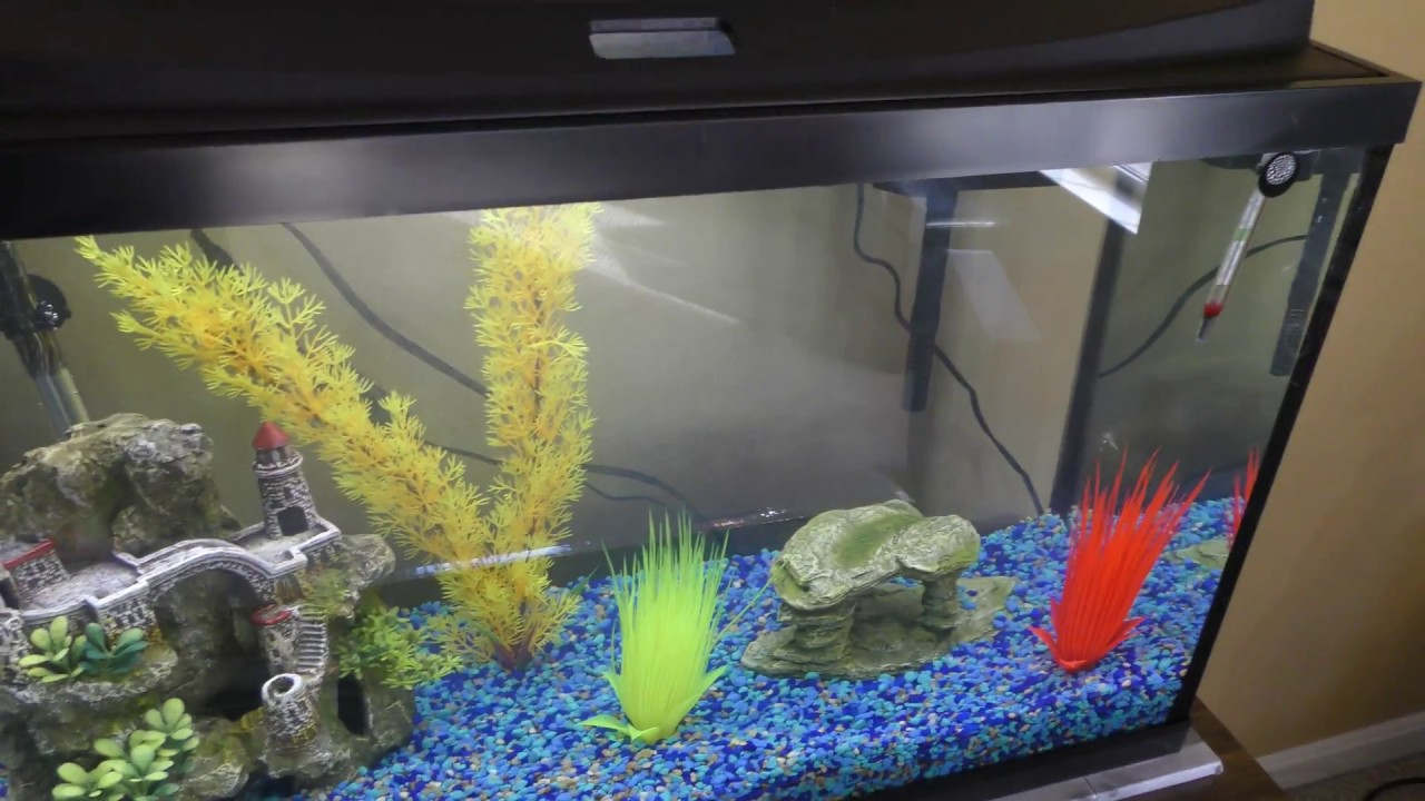 Most awesome fish tanks