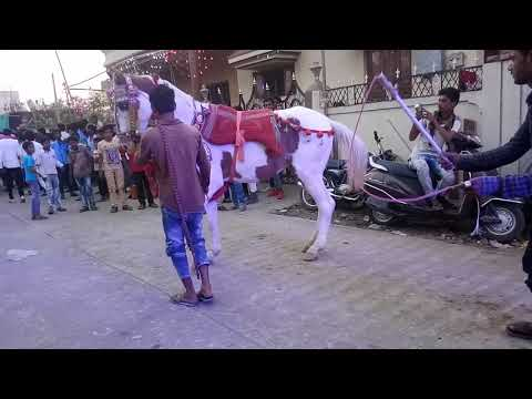 28 March दत्त वाडी sandal by Chand Kurpa Dj Dhumal Gurp Nagpur 8605956945 8999063831