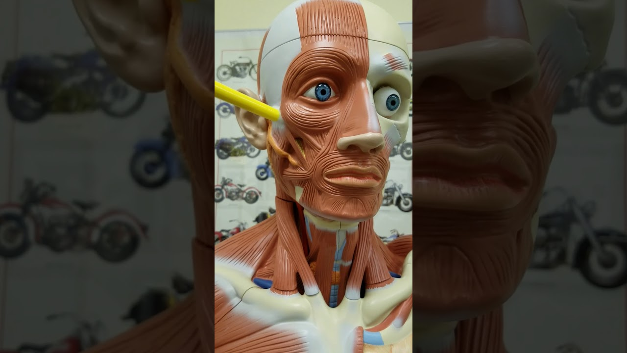 porn-pics-can-you-build-your-facial-muscles