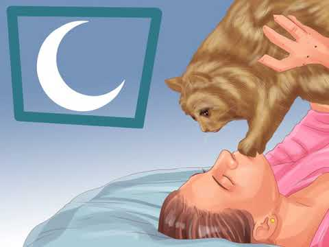 Get Your Cat To Sleep With You
