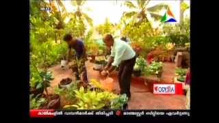 EASY way to grow Fruits , Vegetables & Medicinal Plants on terrace!