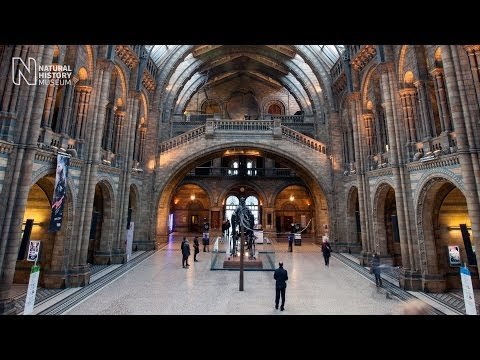 A day at the Museum | Natural History Museum