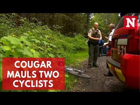 'Emaciated' Cougar Mauled Two Washington Cyclists, Killing One