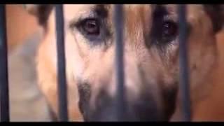 Бездомные псы умирают спокойно(Жааалкооо!, 2015-01-29T17:56:11.000Z)