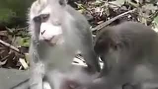 Приколы 30 лет брака обезьяны