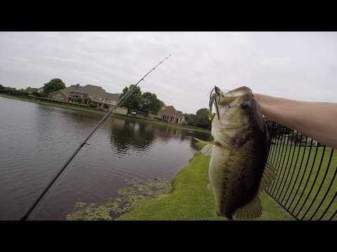 Early Summer Bass Fishing in Ponds
