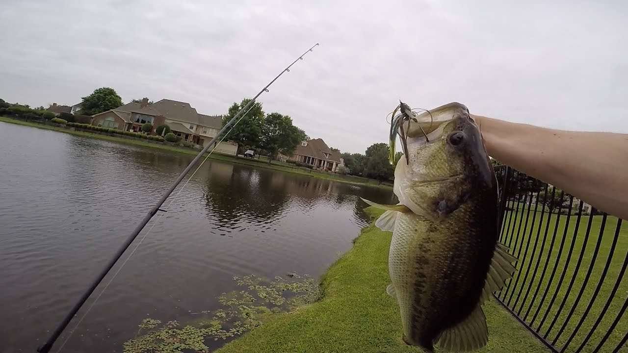 Early summer bass fishing in ponds youtube for Buy bass fish for pond