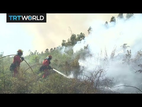 Portugal Fire: Firefighters continue to fight deadly blaze