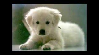 le 10 razze canine  più belle al mondo