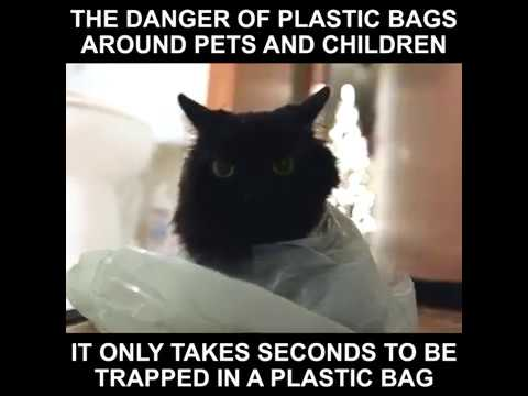 The Danger of Plastic Bags Around Pets & Children