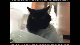 「そこに袋があったから」レジ袋にショッピングバッグ、この誘惑と危険に満ちた物体に魅了される猫たち