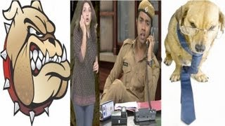 Mad Dogs Vs Good Dogs : Episode 326 - Comedy Show Jay Hind!