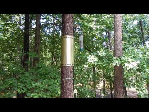 How To Keep Squirrels Out Of Fruit Trees Doovi