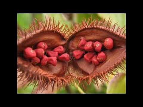 L'urucum, la plante qui réactive votre bronzage de manière naturelle