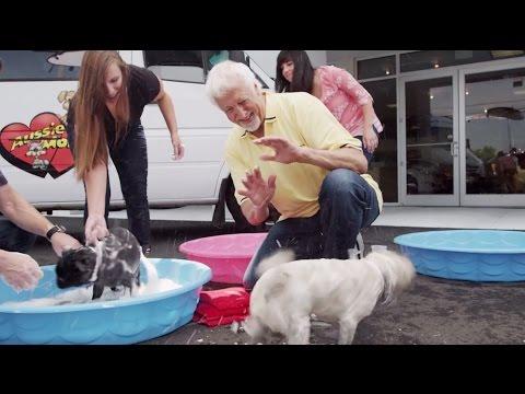 Mark Jacobson Toyota - Dog Washing