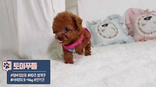 집에서 키우기 쉬운 강아지 추천 털 안빠지는 작은 강아지 종류