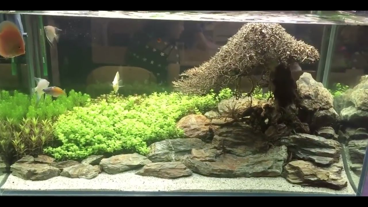 Bonsai Driftwood Aquascaping Youtube