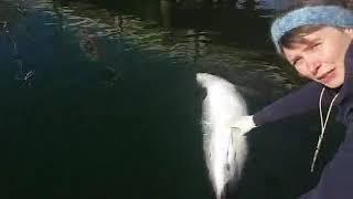 Online fra Fjord&Bælt #2 om hvalerne