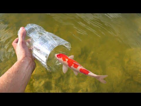 Coca-Cola Fish trap Catches RARE Colorful Fish for JAWS!!
