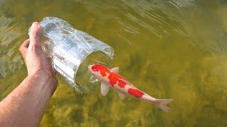 coca-cola-fish-trap-catches-rare-colorful-fish-for-jaws