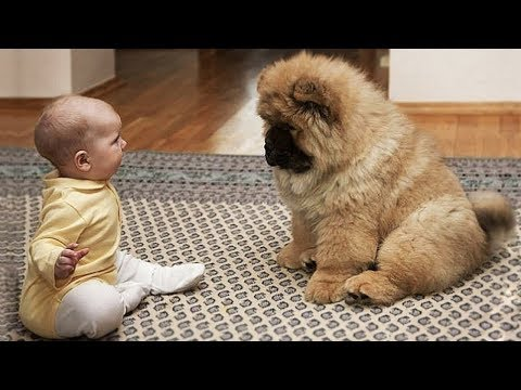 Cute is Not Enough - Funny Cats and Dogs Compilation #137