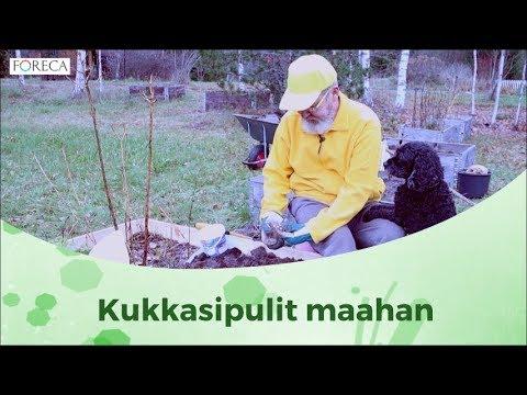 Puutarhan syksy: Näin teet istutuksia ensi vuotta varten