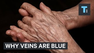 Your blood is red, so why are your veins blue?