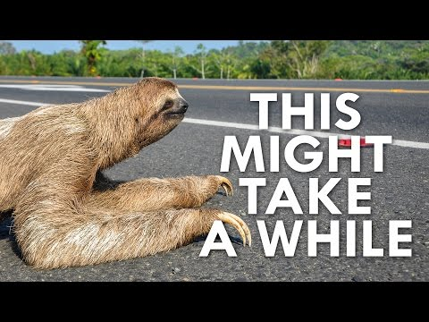 Thumbnail: Why Are Sloths So Slow?