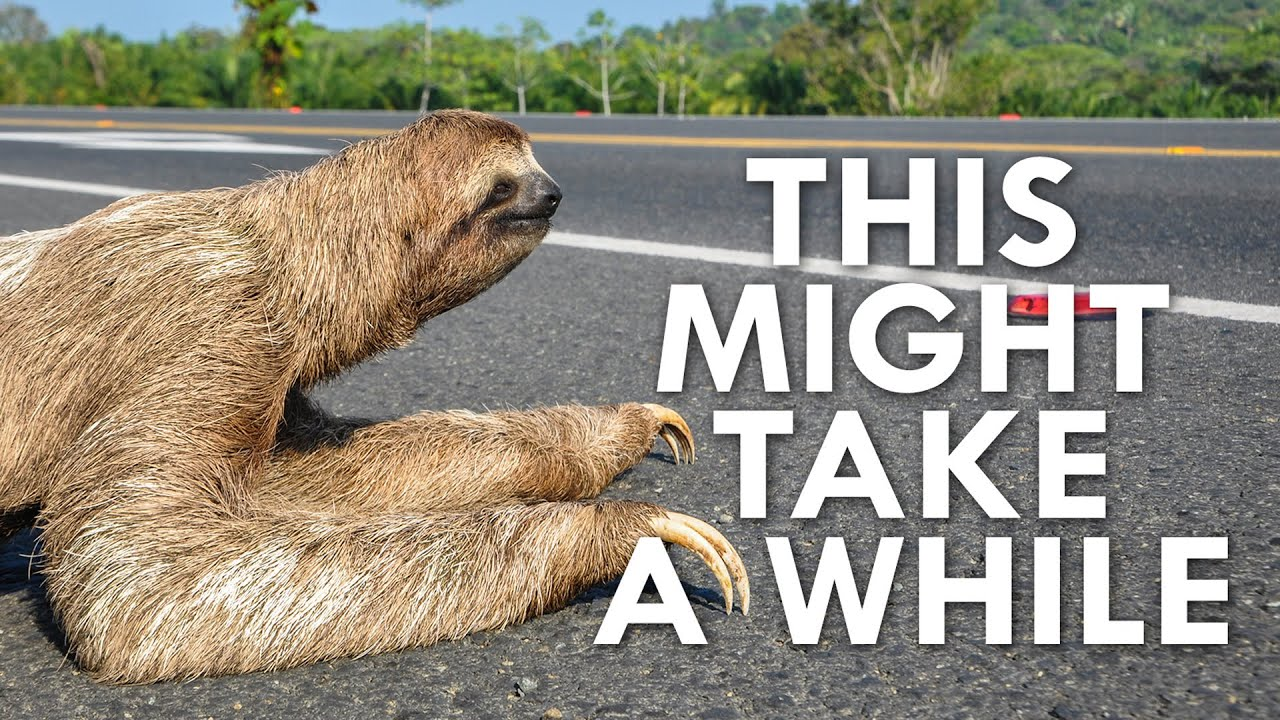 Why Are Sloths So Slow?