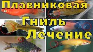 купил рыб с плавниковой гнилью, лечение