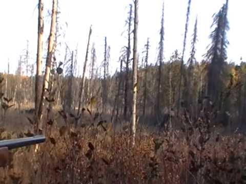 Moose Hunting, Matachewan/Kirkland Lake, Ontario
