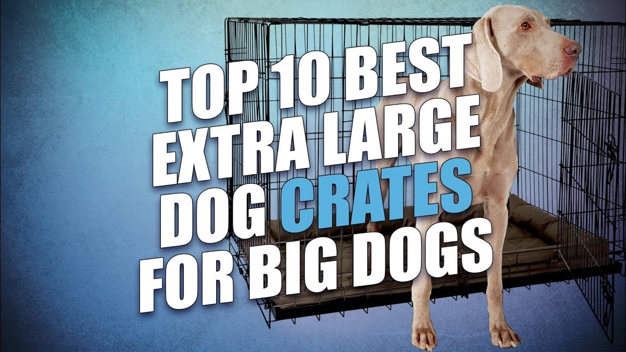 Top 10 Best Extra Large Dog Crates For Big Dogs Youtube