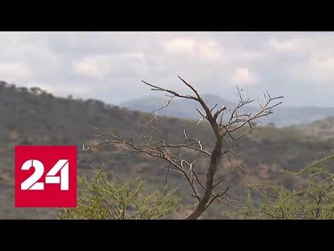 Российские инвестиции как долгожданный дождь для измученной засухой экономики Намибии - Россия 24