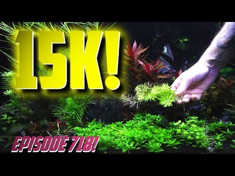 Aquarium Fish Questions Answered Episode 720 Youtube