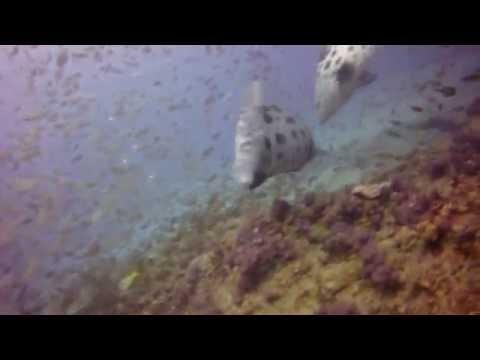 Dive Ponta Mozambique