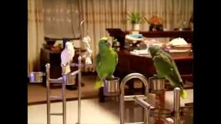 What a Parrot JUST say SUBHAN ALLAH    amazing