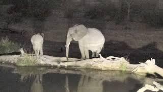 Djuma: Elephants quinching their thirst - 18:50 - 07/24/18 thumbnail
