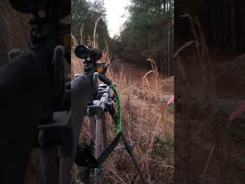 deer hunting gone wrong