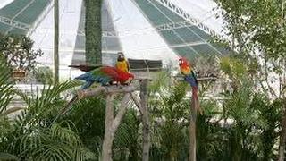 Conservación de Aves - Aviarios - TvAgro por Juan Gonzalo Angel