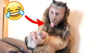 Baby Monkey LOVES His Brother! (CUTE)