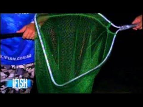 How To Catch Prawns IFISH