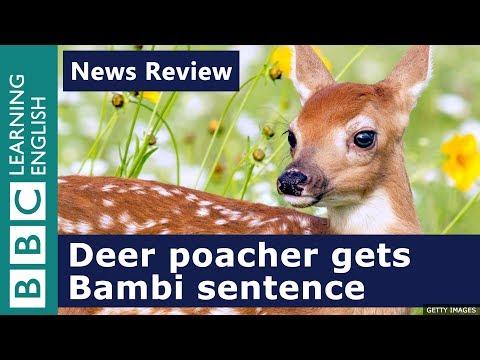 Deer poacher gets Bambi sentence: BBC News Review